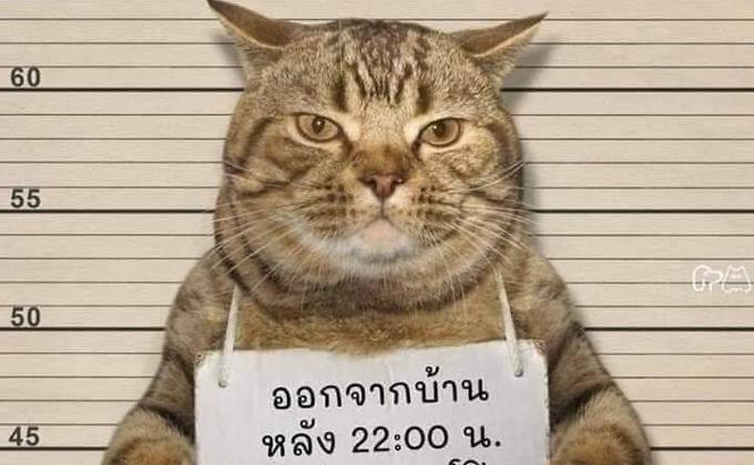 被逮捕的猫。