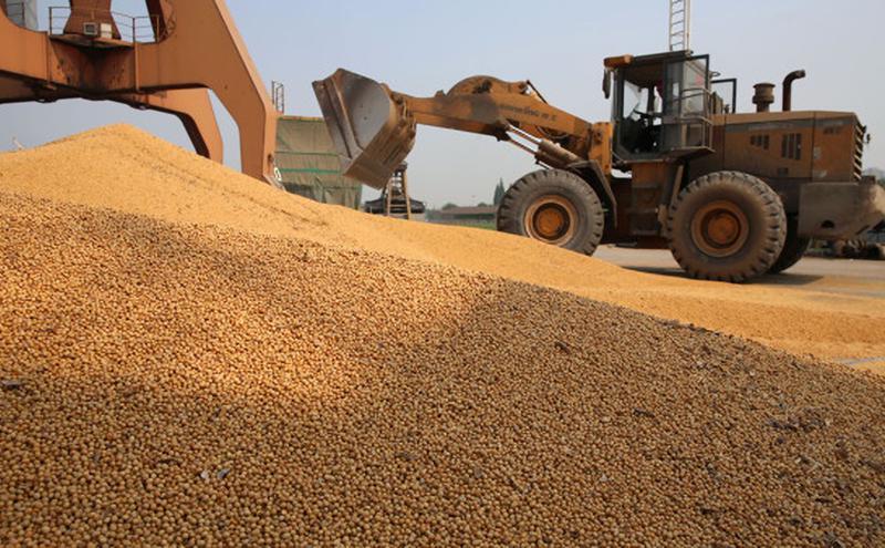 川普祭出制裁措施后 传中国停购美农产品