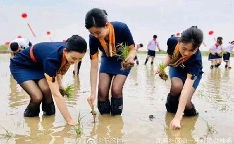 青岛空姐穿黑丝短裙下田插秧引发民间一片嘘声。(图片来源:微博)