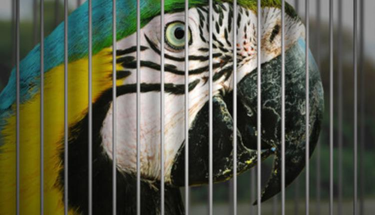 贩卖野生鹦鹉示意图
