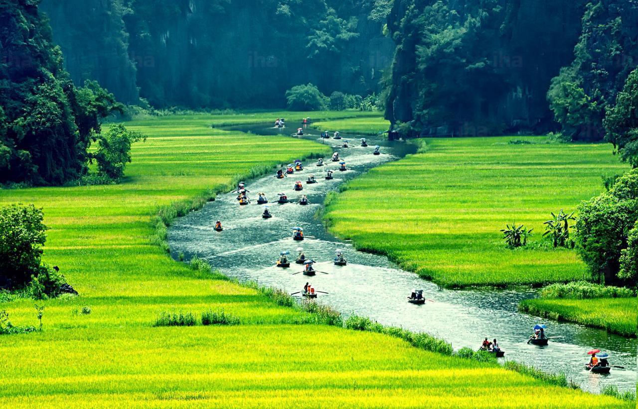 越南,宁平,稻田,河流