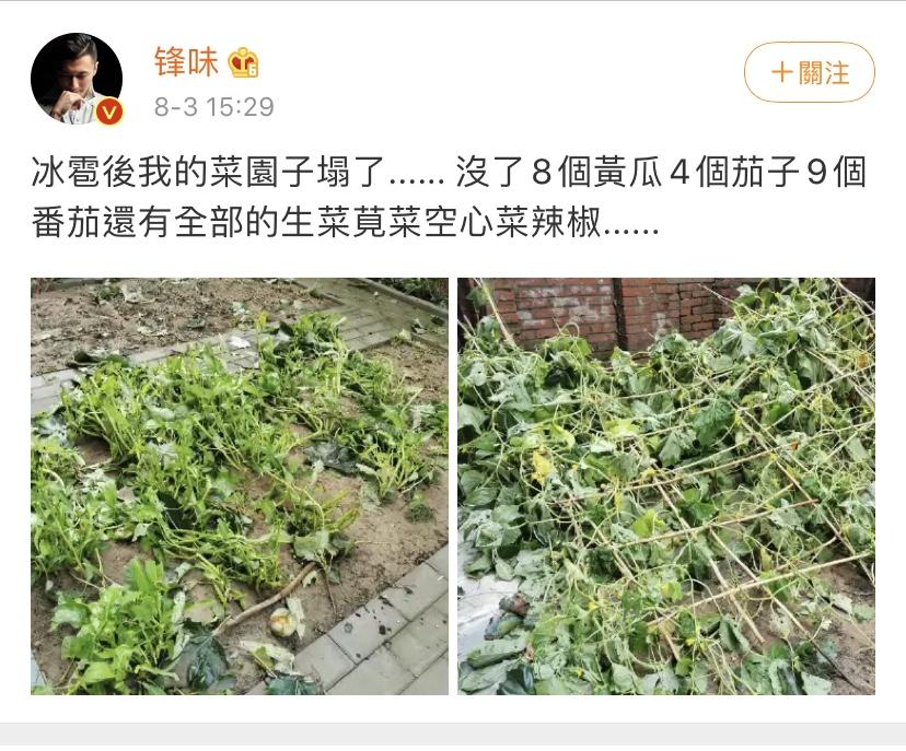 谢霆锋北京菜园被毁