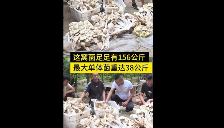 云南巨大野生菌菇经村民搬下山