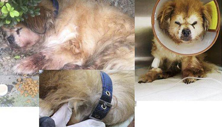 上海查处首例养犬人遗弃犬只案