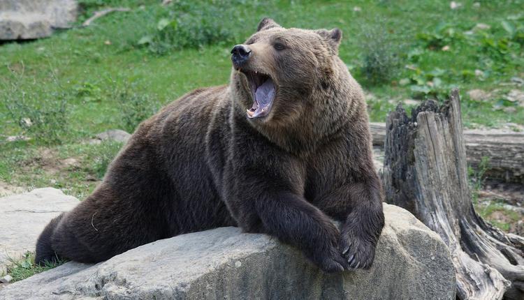 美国马里兰州有5名民众一起野餐时,遇到熊出没。