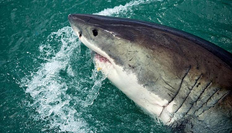 昆州黄金海岸一名冲浪者在海中遭遇鲨鱼袭击后,因伤势过重不幸丧生