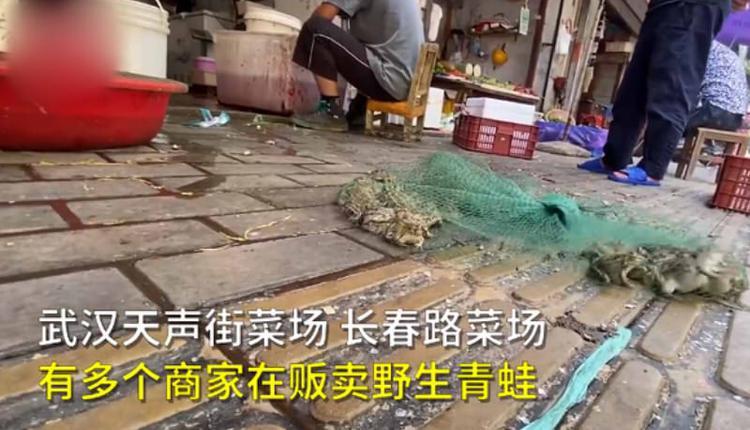 武汉菜场商户明目张胆卖野生青蛙