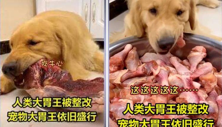 宠物博主让狗当大胃王