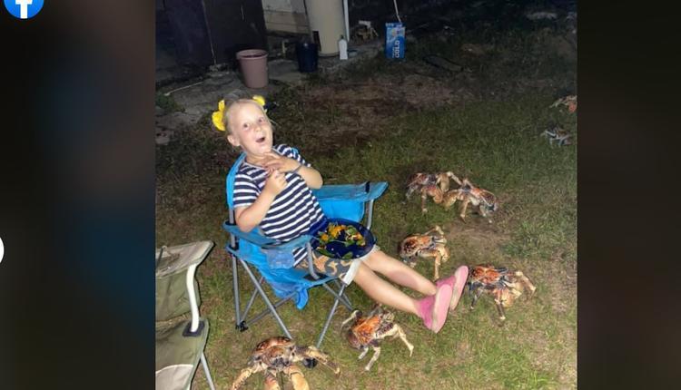 巨型螃蟹们