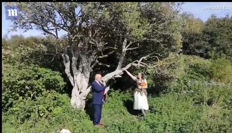英国女子对一棵老树一见钟情!