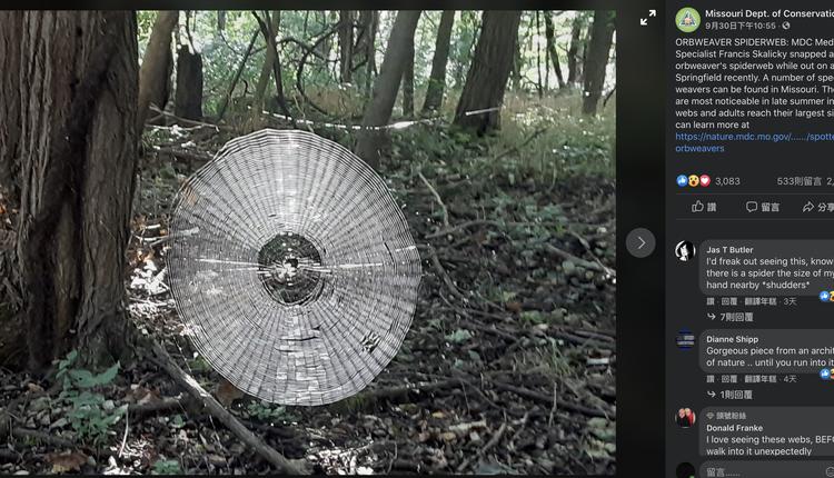 超密度同心圆蜘蛛网
