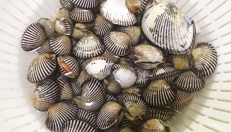 雪蛤 图片来源:推特