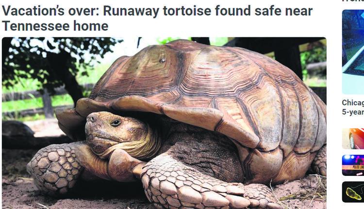 烏龜「離家出走」