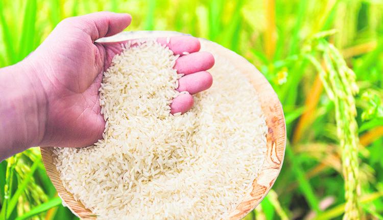 2,500万吨,毒镉稻米,广东,虫洞