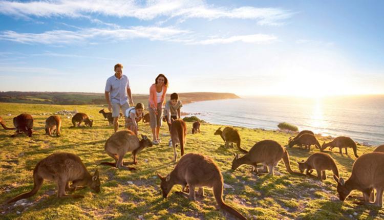 南澳袋鼠岛