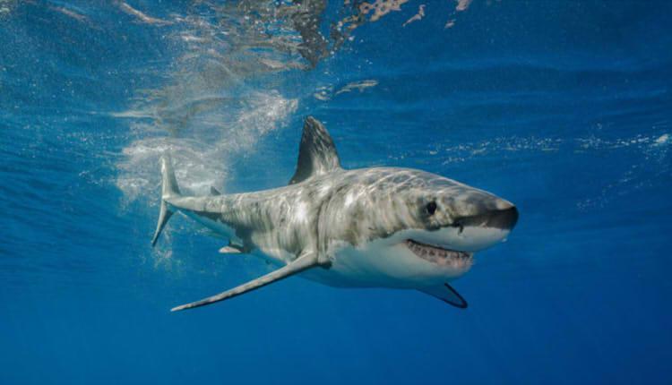 福建一鲨鱼馆发生致人死亡事故