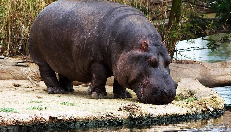 开放式动物园 图片来源: Flickr
