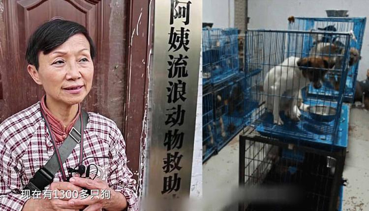 68岁老人收养1300条流浪狗