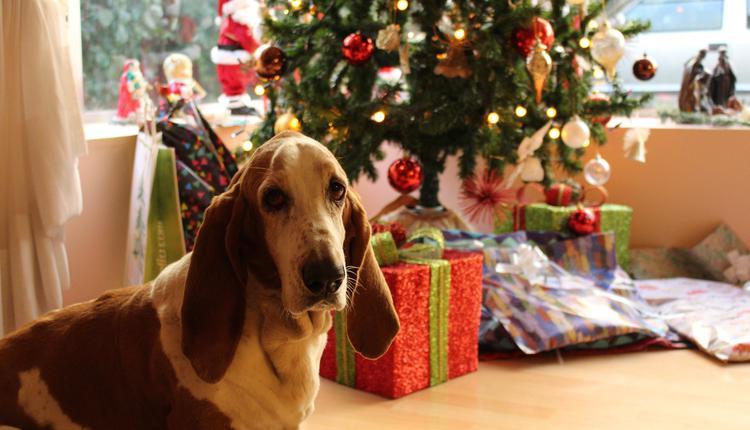 圣诞树,礼物,狗