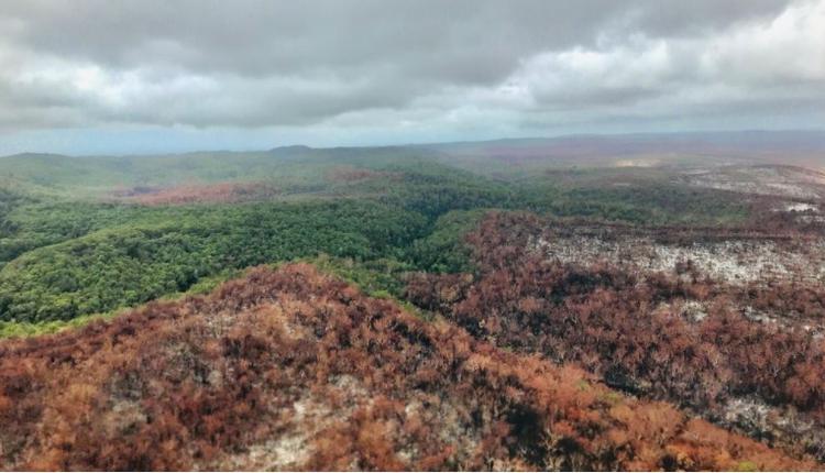 弗雷沙岛的 过火面积超过85,000公顷