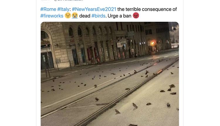 罗马街头出现大量鸟类死亡