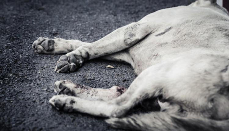 七旬老人毒杀22条宠物狗获刑3年