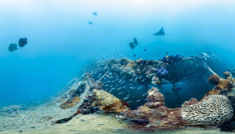 永嘉拉号沉船(Yongala Shipwreck)