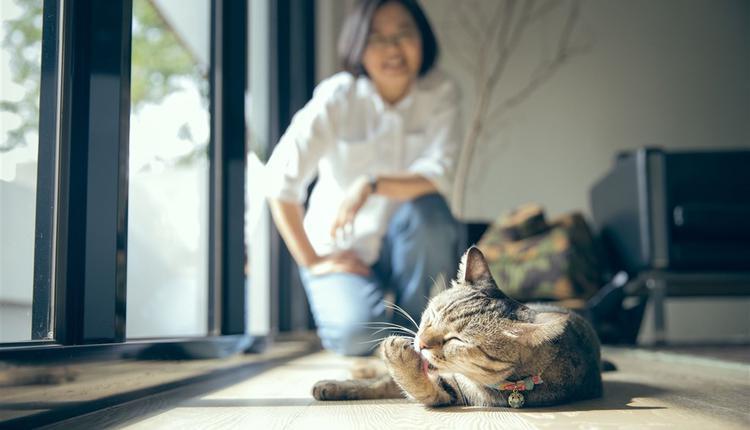 台湾总统蔡英文晒猫