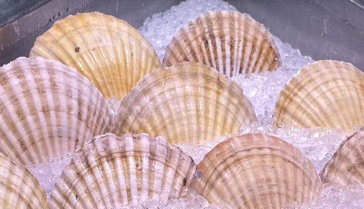 购物,海鲜,贝壳