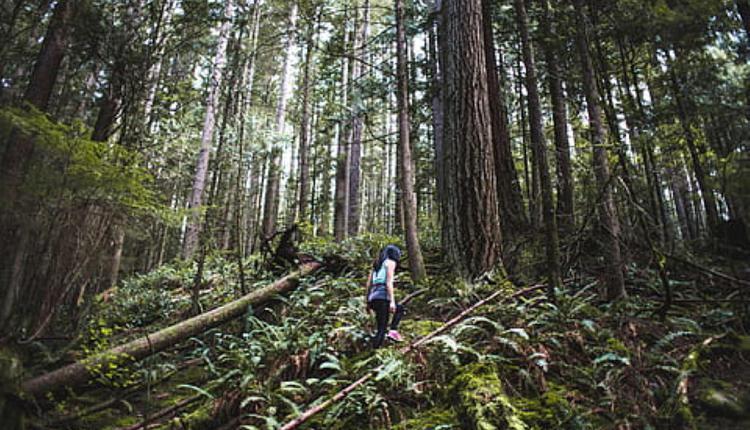 徒步旅行(图片来源:Piqsels,与本文内容无关)