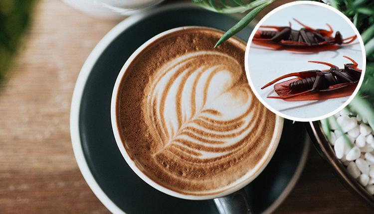 咖啡与蟑螂