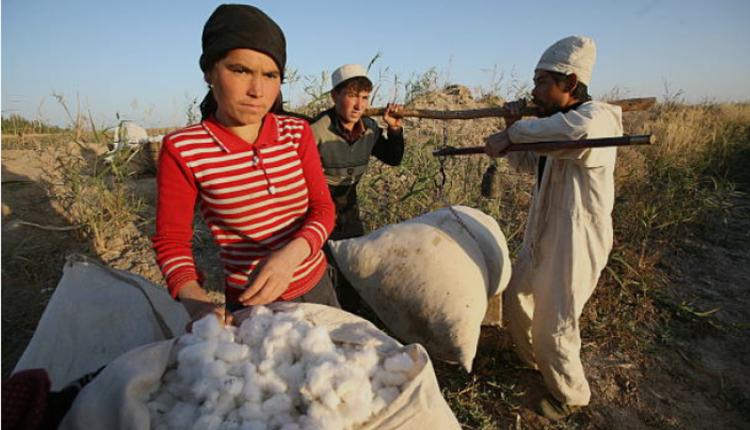 新疆民众正在收棉花
