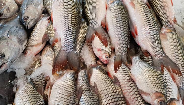 鱼 海鲜 购物