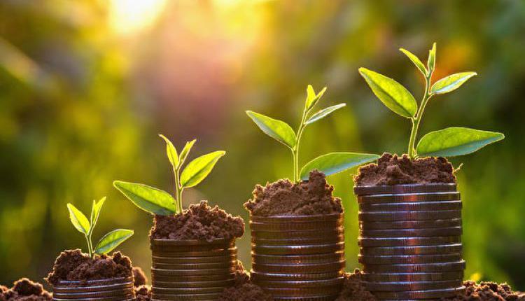 财富,养老金,积累,小树苗