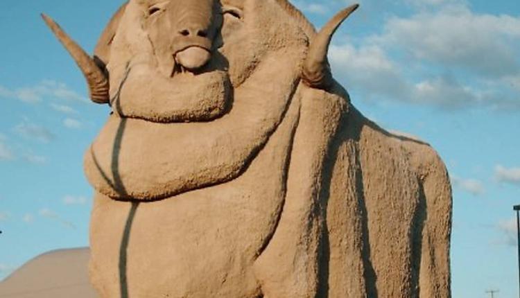 大美利奴羊(The Big Merino)