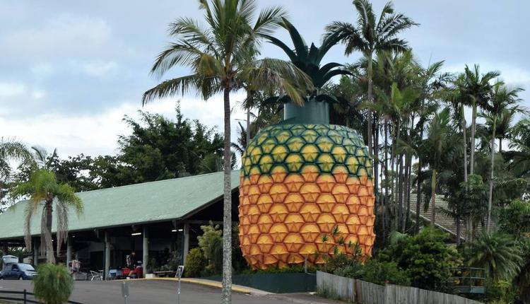 大菠萝 图片来源:timeout