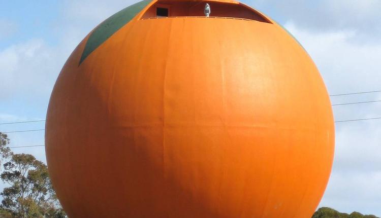 大橘子 图片来源:timeout