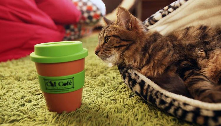 Cat Café(圖片來源:timeout)