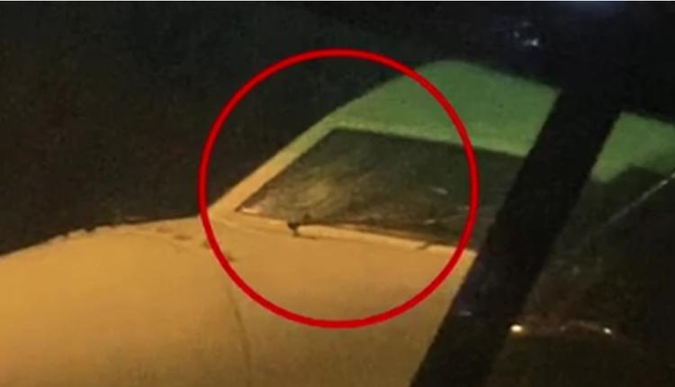 东航班机遭鸟撞击