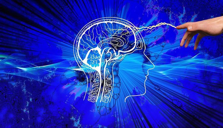 人脑,头脑