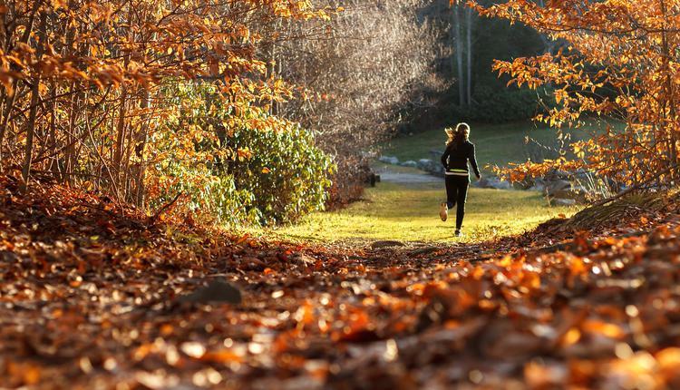 跑步,徒步,森林,郊外