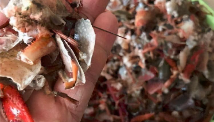 小龙虾变得支离破碎
