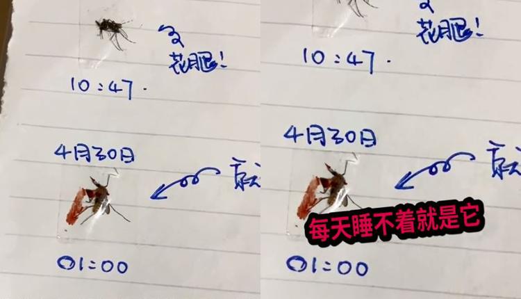 深圳男子制作灭蚊日记