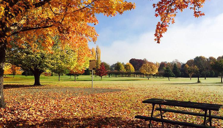 Millbrook Park,秋叶,秋季