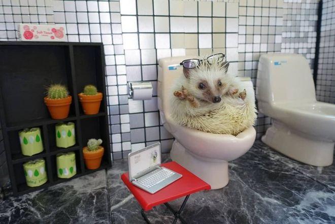 小刺猬的厕所