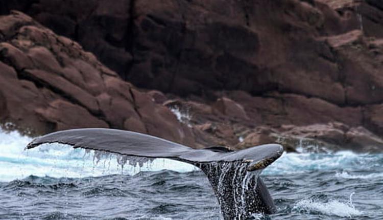座头鲸示意图 图片来源:Piqsels.jpg
