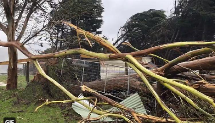 树木倒塌,房屋被砸,狂风暴雨