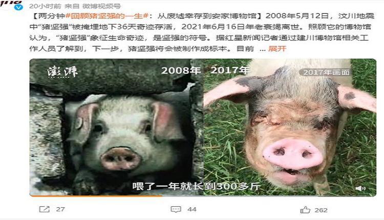 舉國關注「豬堅強」 美媒:遇難學生卻只有家長記得