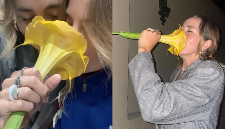 拉斐拉与朋友所摘下的这朵大黄花