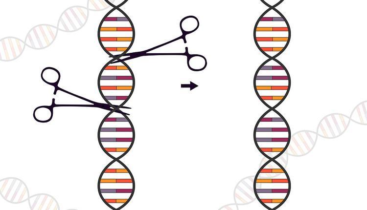 基因 基因编辑